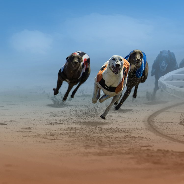 Virtual Greyhound Racing Channel with Real Content by Vermantia