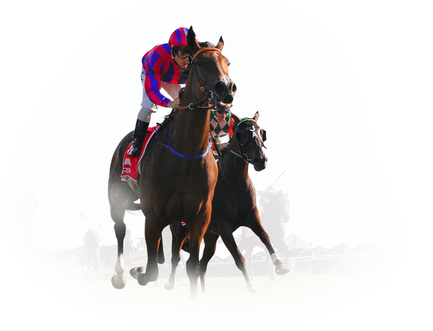 Bespoke Horse and Greyhound Racing Channel by Vermantia