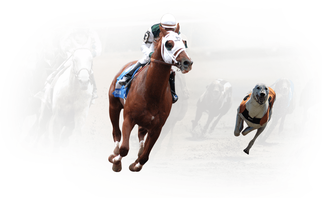 European Racing Channel with Horses and Greyhound Races