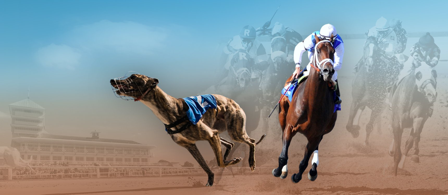 Live Horse and Greyhound Racing Channels