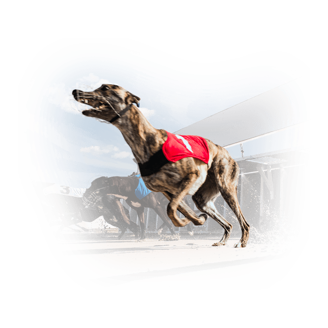 Live greyhound and horse racing by Vermantia