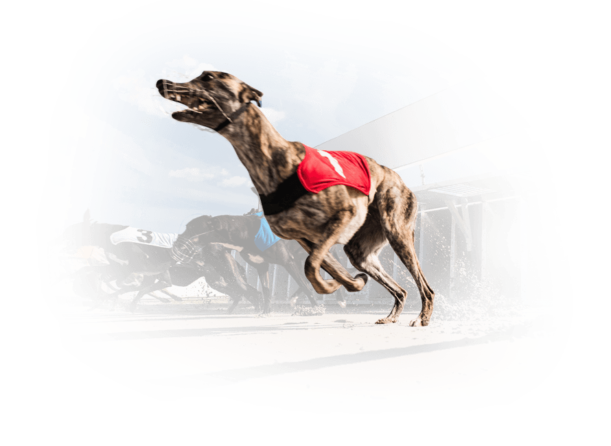 Virtual Greyhound Racing with real content by Vermantia and Kiron