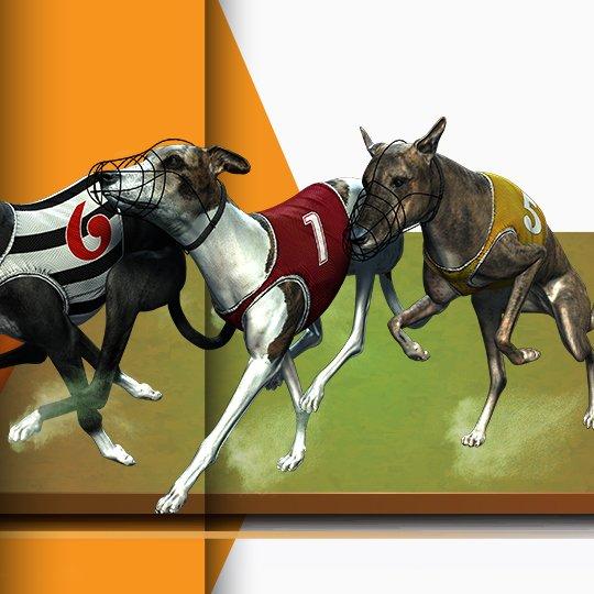 Virtual Greyhound Racing Virtual Game Idle Screen