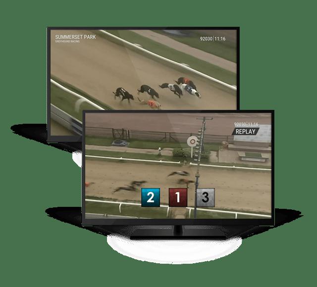 Key Features of Virtual Greyhound Racing