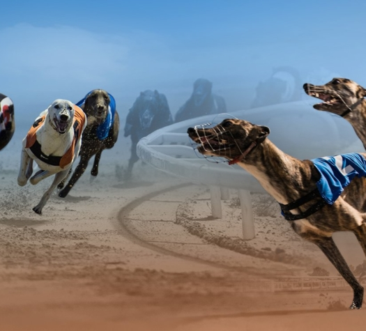 """Vermantia and Kiron Interactive announced they had joined forces to deliver the """"next generation"""" of virtual racing using real greyhound racing content"""