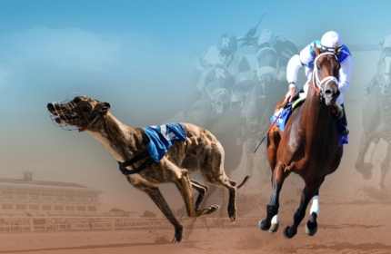 Live Greyhound and Horse Racing Channels by Vermantia