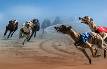 Virtual Greyhound Racing by Vermantia